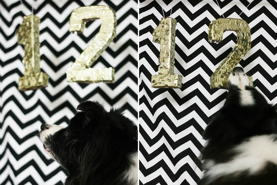 Black and White Dog Birthday Party | Pretty Fluffy