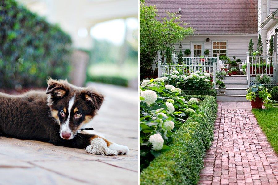 Puppy Friendly Home | Pretty Fluffy