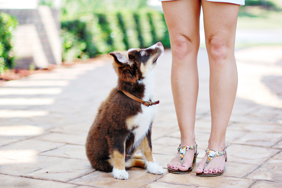 Puppy Proof Your Home | Pretty Fluffy