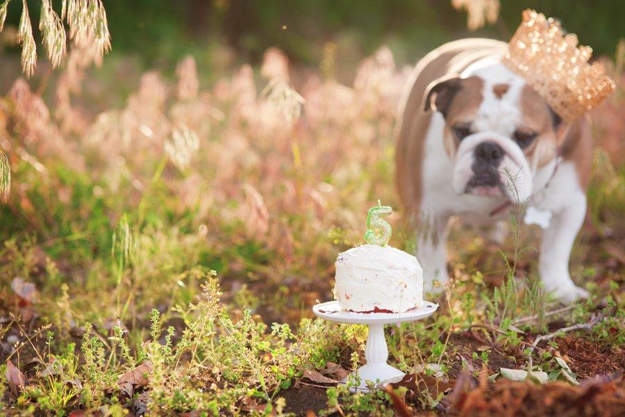 Dog Birthday Cake Smash by Missy Moo Studio | Pretty Fluffy
