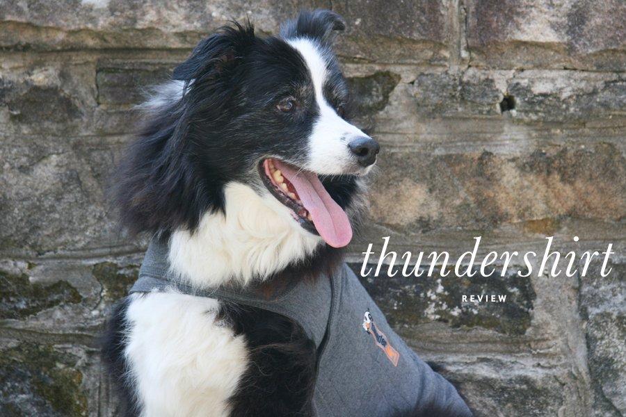 Thundershirt Review   Pretty Fluffy