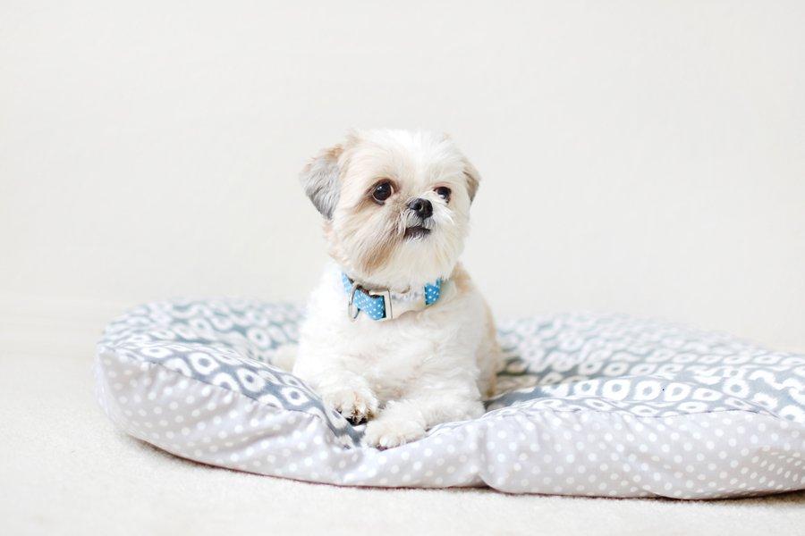 DIY: No Sew Pet Bed