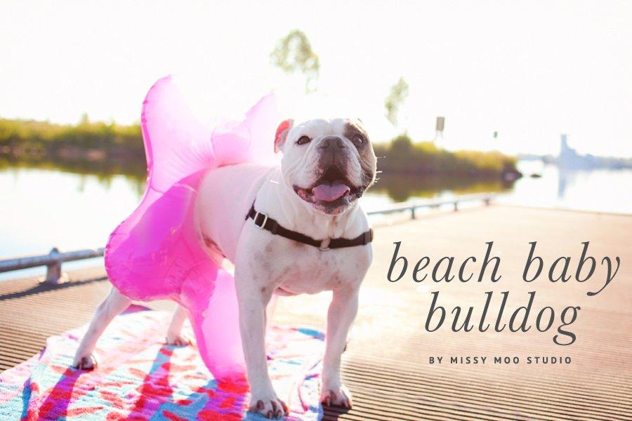 Beach Baby Bulldog - Photography by Missy Moo Studio | Pretty Fluffy