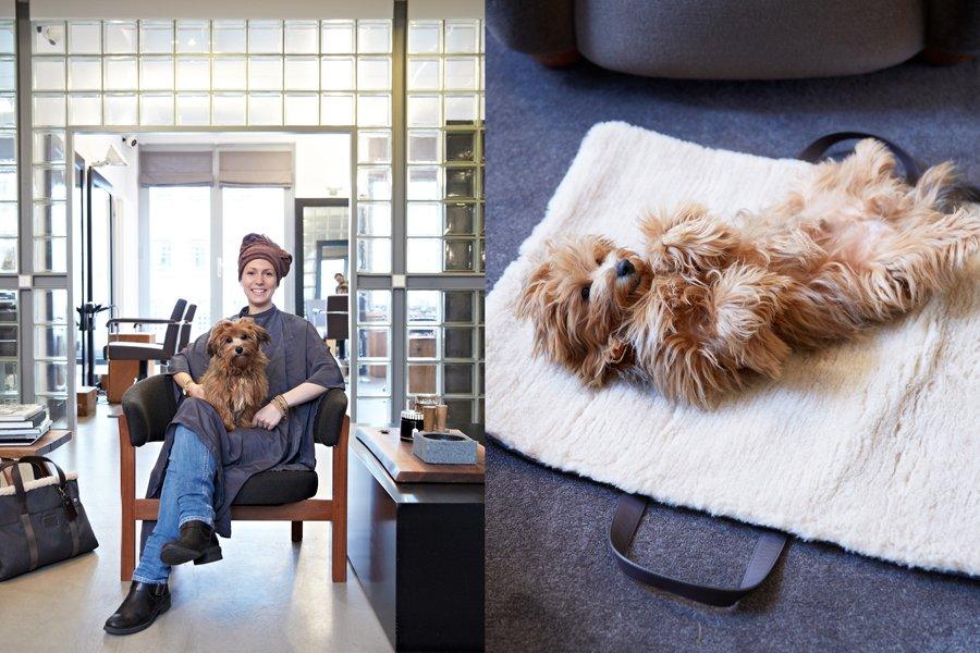 Cloud 7 and Tumi Travel Pet Accessories   Pretty Fluffy