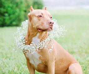 DIY: Floral Dog Wedding Wreath