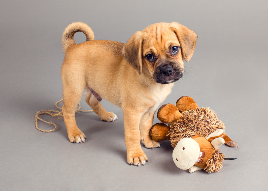 5 Tips for Photographing Your New Puppy
