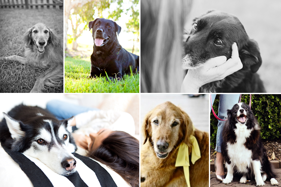 Senior Dog Checklist - Everything you need for an older dog