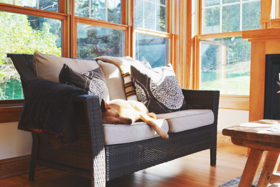 5 Life Lessons to Learn From Your Dog | www.prettyfluffy.com