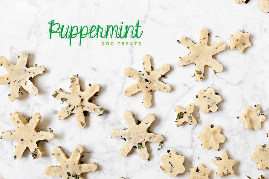 These yummy, healthy and easy to make Puppermint dog treats are perfect for the holidays and will leave your dog with minty fresh breath! Click through for the DIY Peppermint Dog Treat Recipe.
