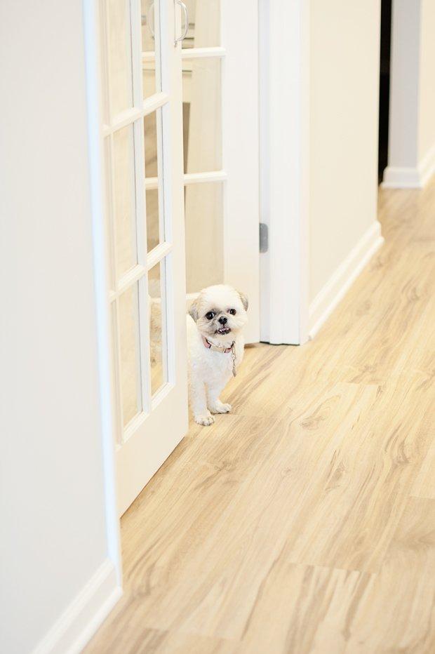 office-dog