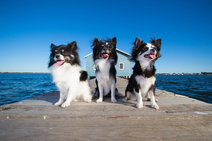 Beach Photography - Perth, Australia - Cookie, Cocoa and Elmo by Petography