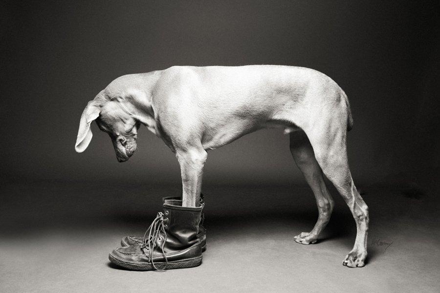 Shoe Dogs by McCartneys Dog Photography