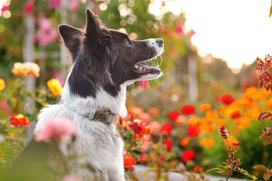 Mattie and Margot Summer Collection - With all the colours of the rainbow, the Mattie and Margot Summer Collection of dog collars and accessories is every dog lovers dream.