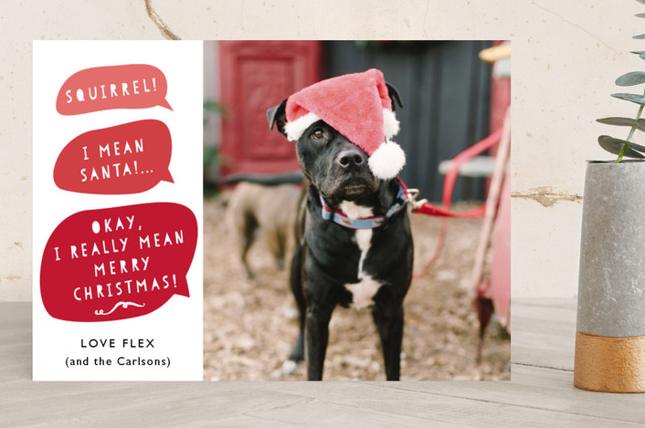 Christmas Card Pets. From bespoke cards to personalised designs, we've found 10 of the best christmas cards for pets and pet lovers this holiday season.