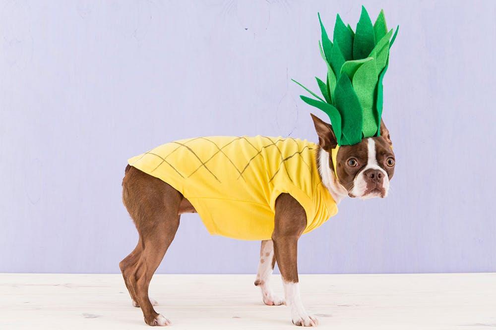 15 DIY Halloween Dog Costumes & DIY Tutorials