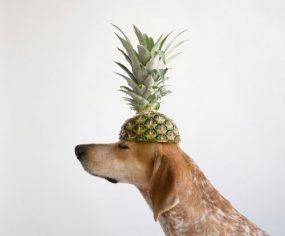 What fruits can dogs eat? Superfood fruits for dogs