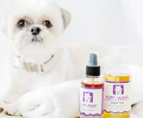 Just 3 steps to a healthier dog! Spring clean your dog's health naturally from the inside out – and have them happier and healthier in 30 days.
