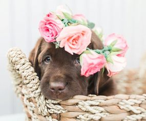 Expert tips on photographing puppies. Pro photographers share how to capture the perfect puppy photos at home - fuss free and budget friendly.