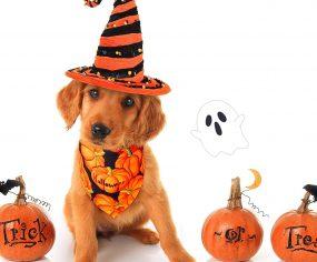 Top Picks: 7 Halloween Dog Costumes & Toys