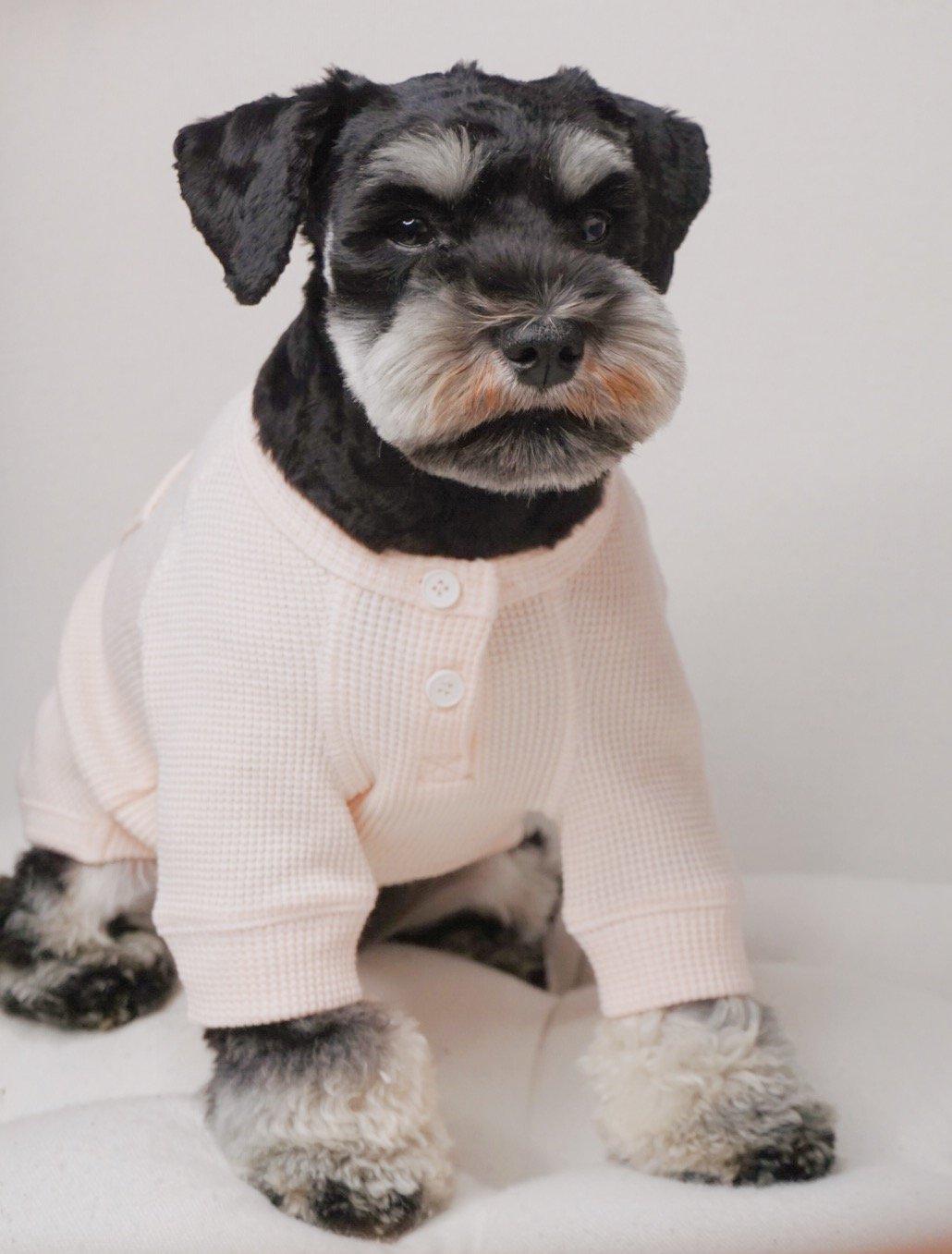Sir Dogwood - Designer Dog Accessories