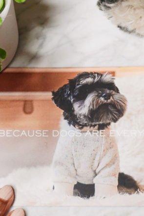 Sir Dogwood - Stylish Dog Accessories - Pretty Fluffy