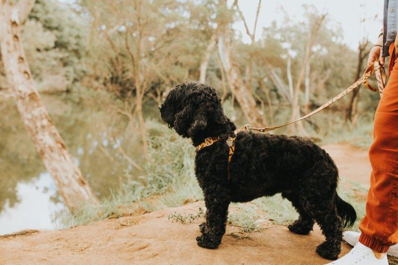 Macalister River Regional Park - Pet Friendly Maffra