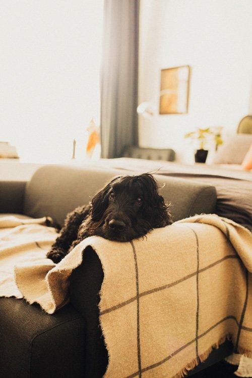 Lounge area in Maison Maffra - Stylish Pet Friendly Accommodation - Pretty Fluffy