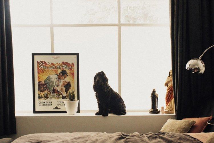 Bed and shopfront window at Maison Maffra - Stylish Pet Friendly Accommodation - Pretty Fluffy