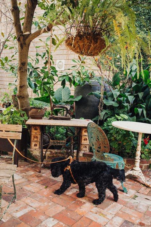 Courtyard retreat of Maison Maffra - Beautiful Pet Friendly Accommodation - Pretty Fluffy