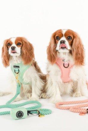 Dog Collars, Leads & Dog Harnesses