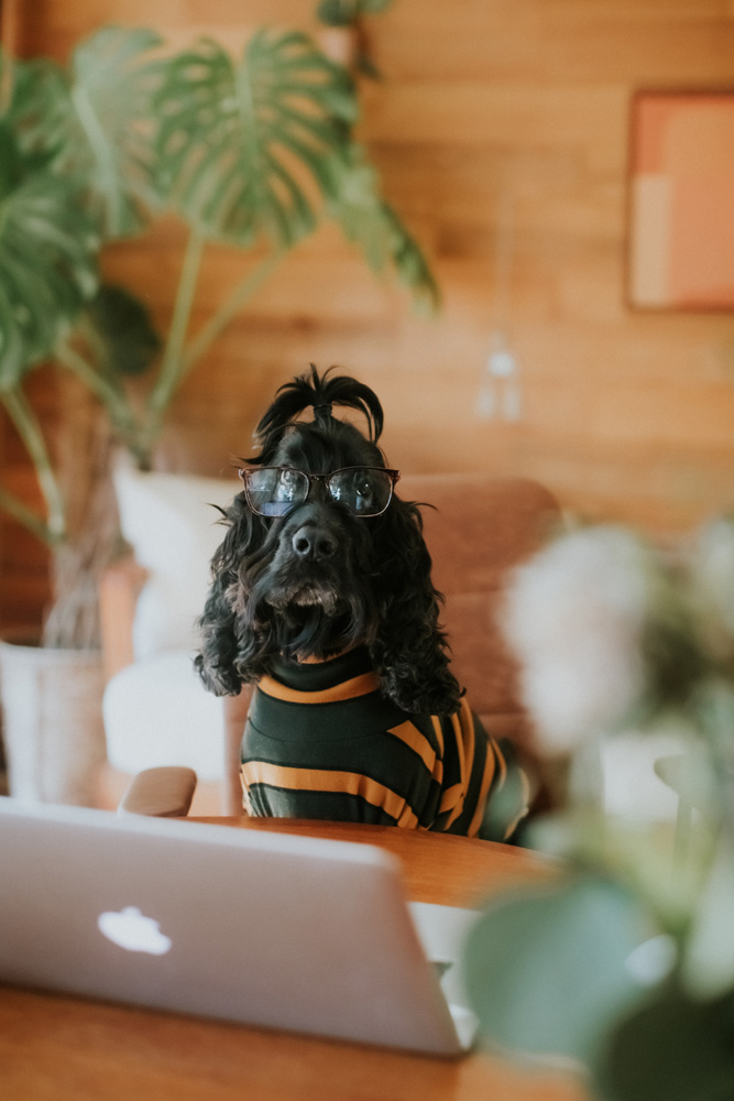Take Your Dog to Work Day: 6 Reasons Dogs Make the Best Co-Workers