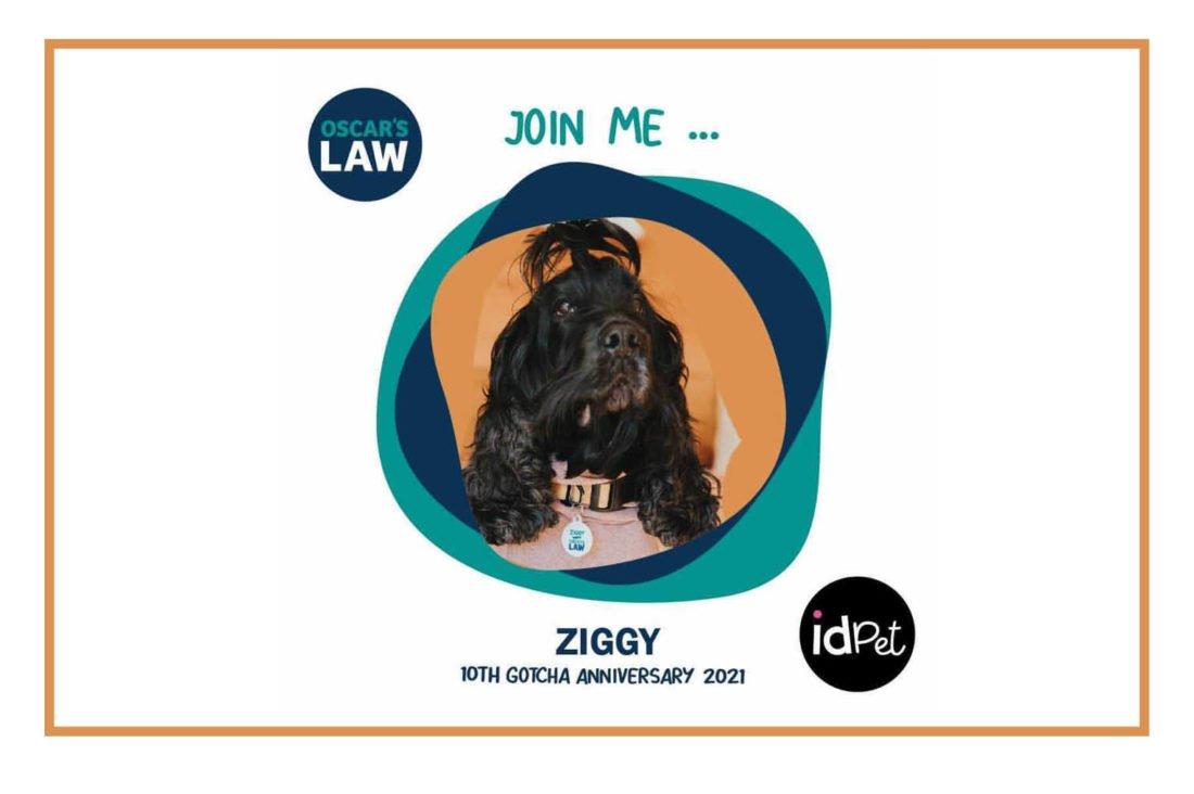 Anti-puppy farming campaign: Oscar's Law IdPet ID Tag Fundraiser Campaign