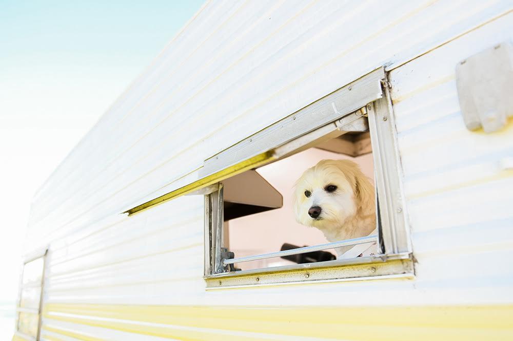 Pet-friendly campervan - Stylish Hound x Camplify