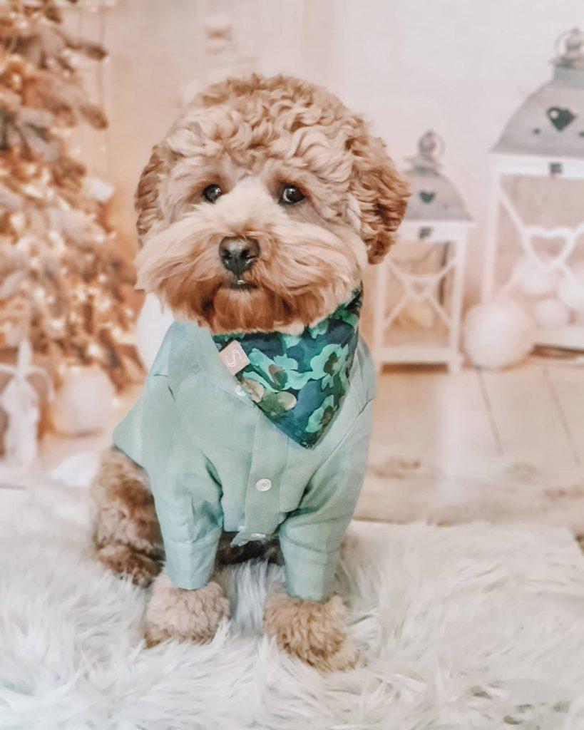 Rose Aqua Liberty Bandana by Sebastian Says - Spring Dog Bandanas & Dog Harnesses by Australian Dog Brands - Pretty Fluffy