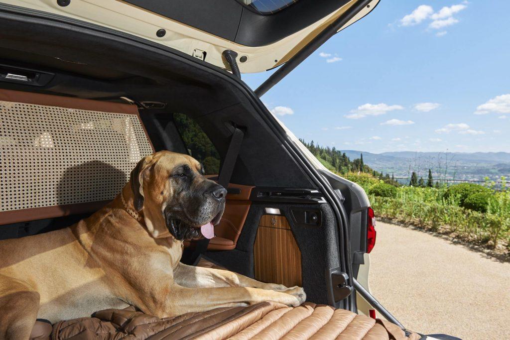 Dog in luxury BMW X7 - Luxury Pet-Friendly Travel Kit: BMW Italia X Poldo Dog Couture