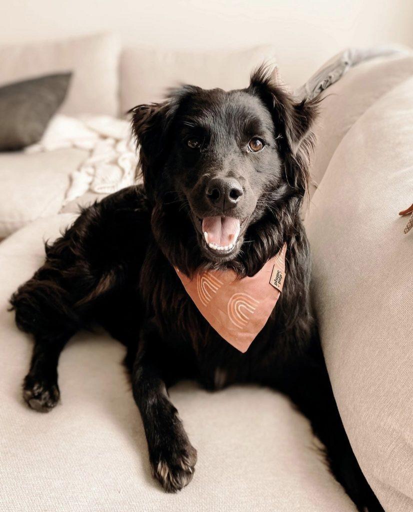The Red Rainbows Dog Bandana by Plume Pup Co - Fall Edition: 12 Stylish Dog Bandanas & Dog Harnesses - Pretty Fluffy