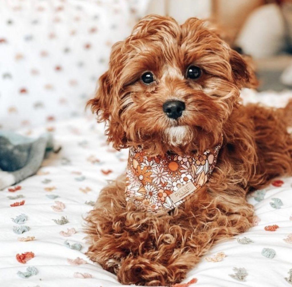 Heidi Bandana by Pillie Pooches - Spring Dog Bandanas & Dog Harnesses by Australian Dog Brands - Pretty Fluffy