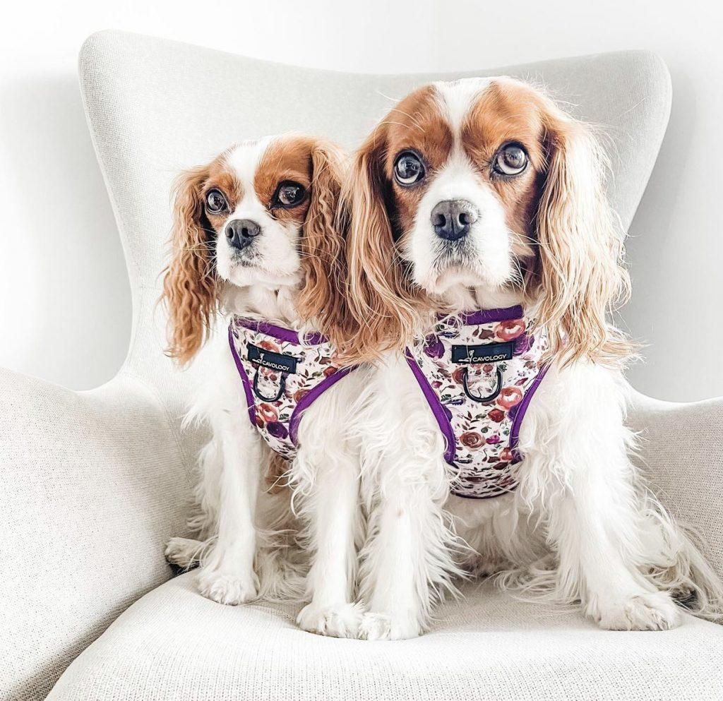 Tea Rose Step In Dog Harness by Cavology - Fall Edition: 12 Stylish Dog Bandanas & Dog Harnesses