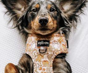 Stylish Dog Bandanas & Dog Harnesses: Fall Edition