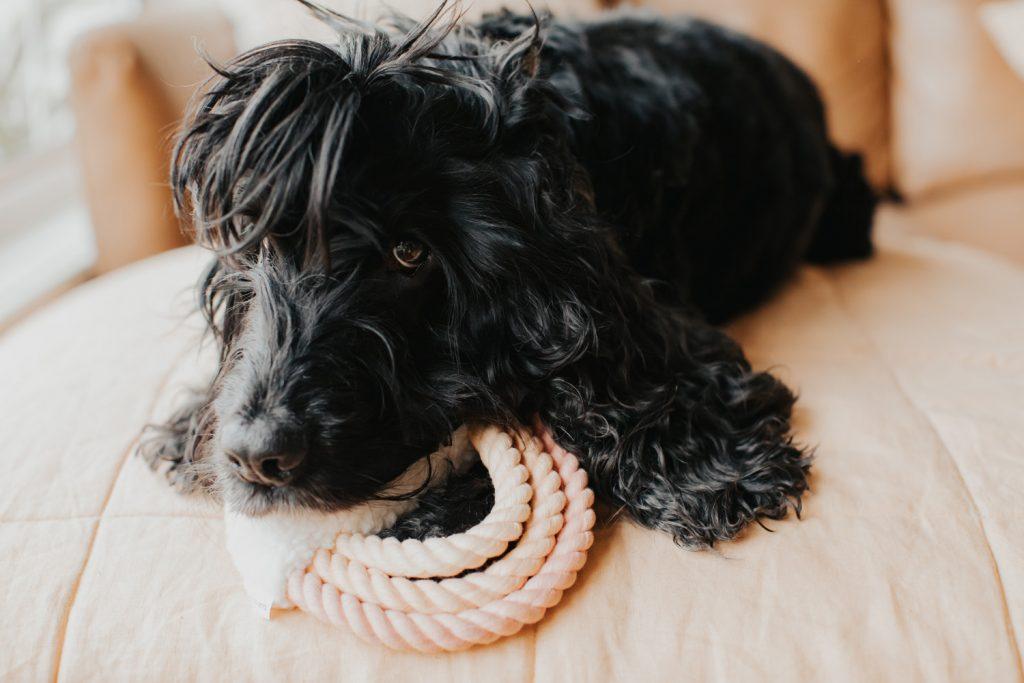 Pretty Fluffy - Dog Toys for a Neutral Home _Django & Co_Cloud 9 Dog Toy
