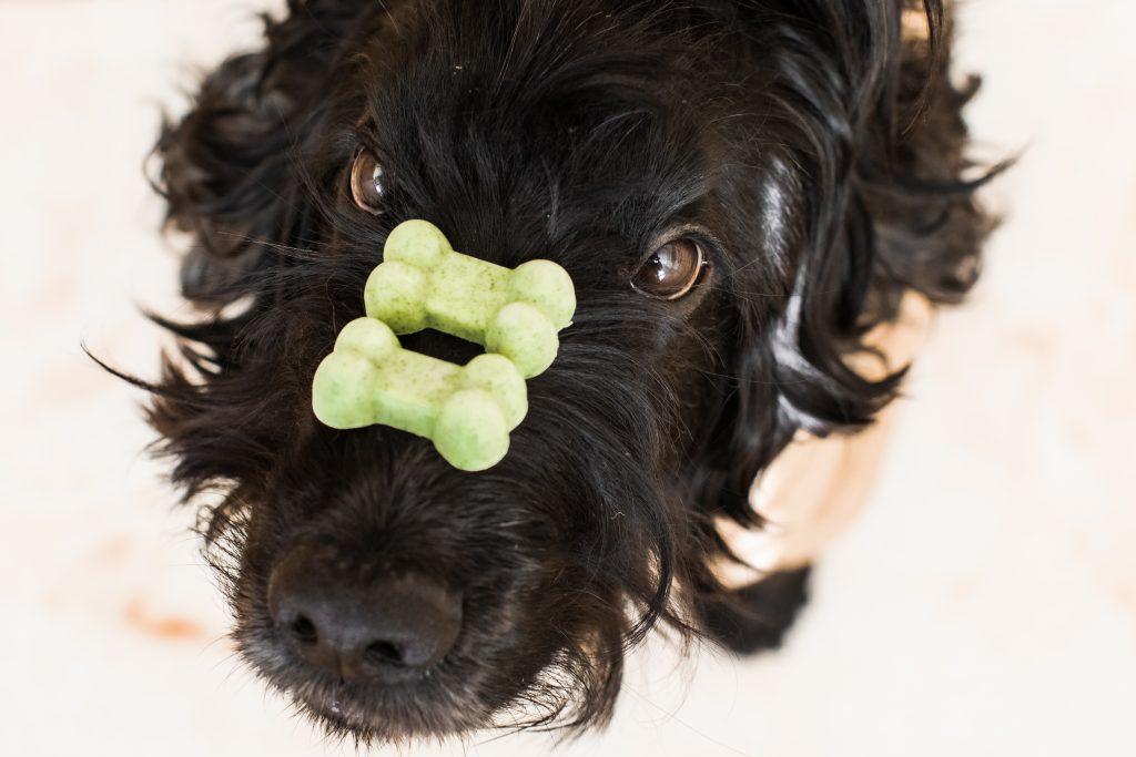 DIY Doggy Breath Mints: Homemade Fresh Breath Dog Treats!