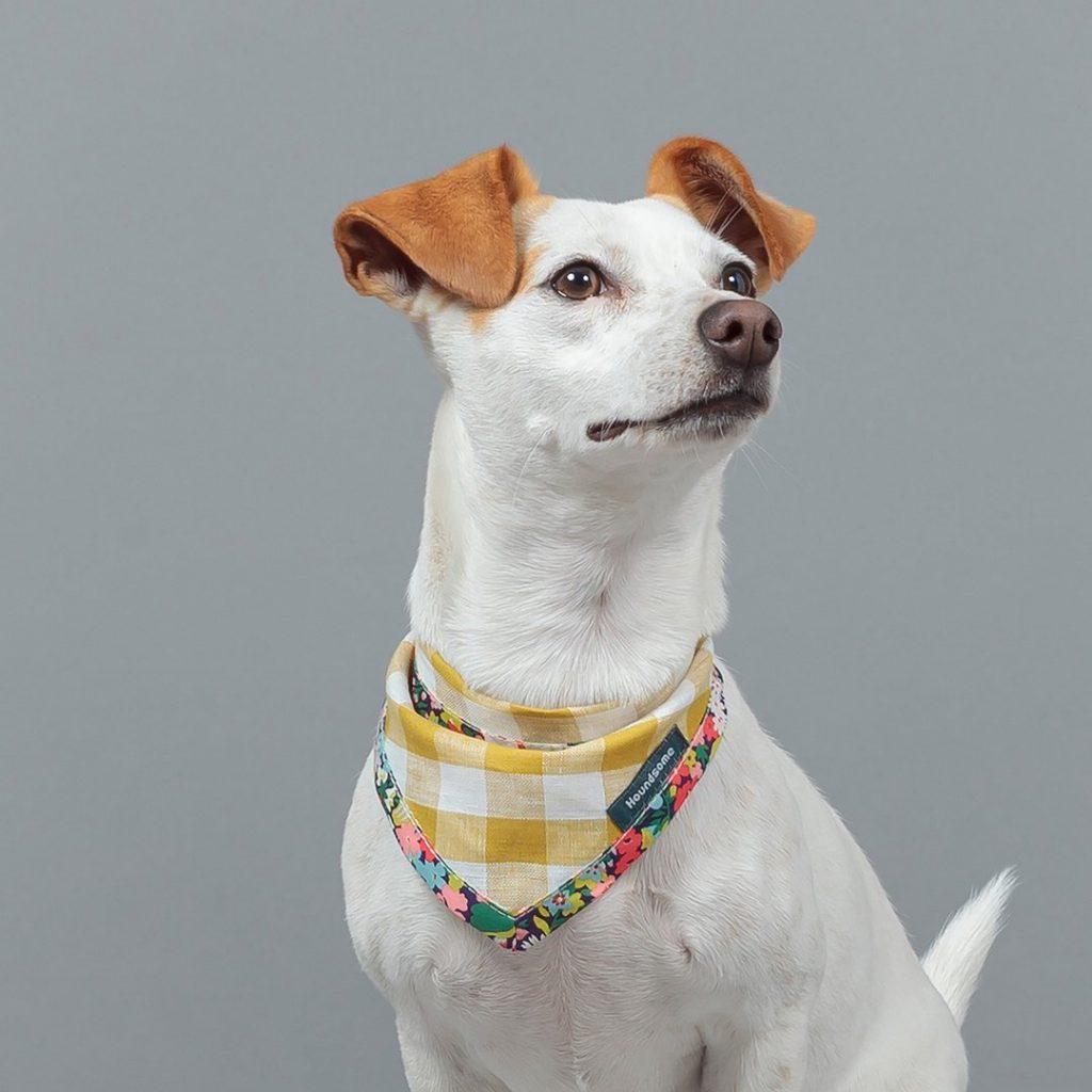 Dog Cravat - Citrine Gingham with Flora Trim by Houndsome - Spring Dog Bandanas & Dog Harnesses by Australian Dog Brands - Pretty Fluffy