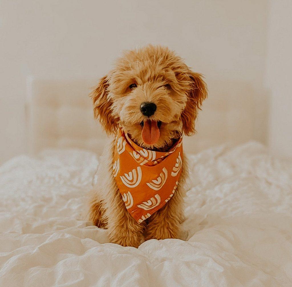 Iris Dog Bandana by zcboho - Fall Edition: 12 Stylish Dog Bandanas & Dog Harnesses - Pretty Fluffy
