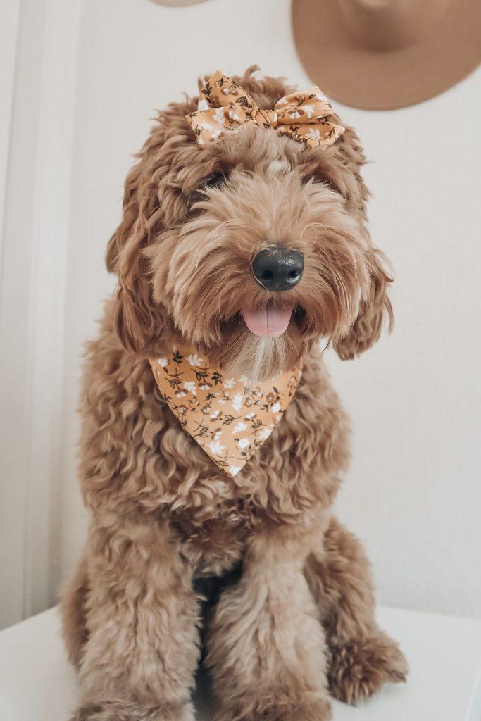 Wildflower Dog Bandana by Blush & Fluff Co - Fall Edition: 12 Stylish Dog Bandanas & Dog Harnesses - Pretty Fluffy