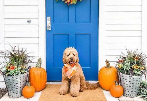 Pumpkin Spice Flannel Dog Bandana by Foggy Dog - Fall Edition: Stylish Dog Bandanas & Dog Harnesses