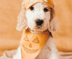 DIY No Sew Halloween Dog Pumpkin Mask and Bandana-27